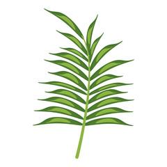 leave palm tropical flora vector illustration eps 10
