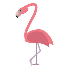 flamingo bird tropical icon vector illustration eps 10