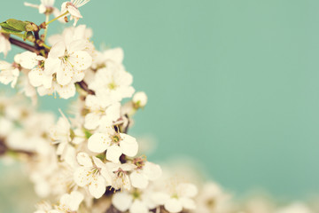 Spring Flowers./ Spring Flowers Background