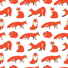 Wild animals collection Red Foxes Background