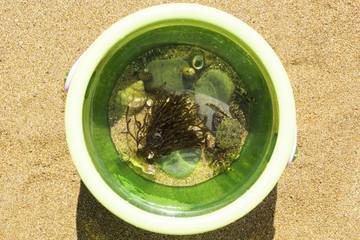Sea life inside a beach bucket