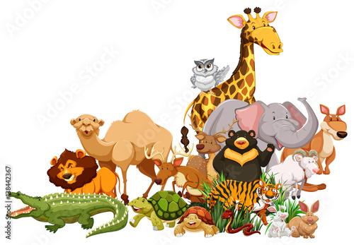 Different wild animals together - photo#30