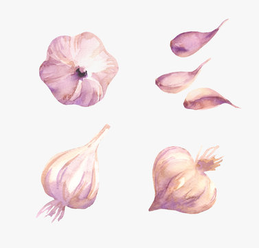 Food design set with garlic watercolor. Vegetable background in hand drawn style. Isolated on white background.