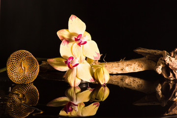 Gelbe Orchidee mit einer Eisenfeder und einer Wurzel mit Wasserspiegelung