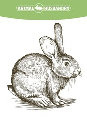 sketch of rabbit drawn by hand. animal husbandry