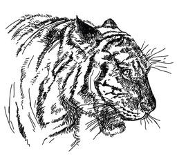 Tiger head vector hand drawing illustration