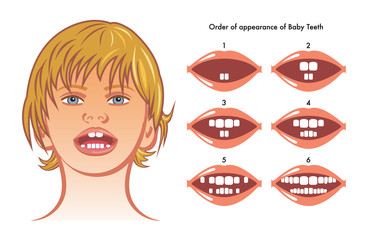 order of appearance of baby teeth