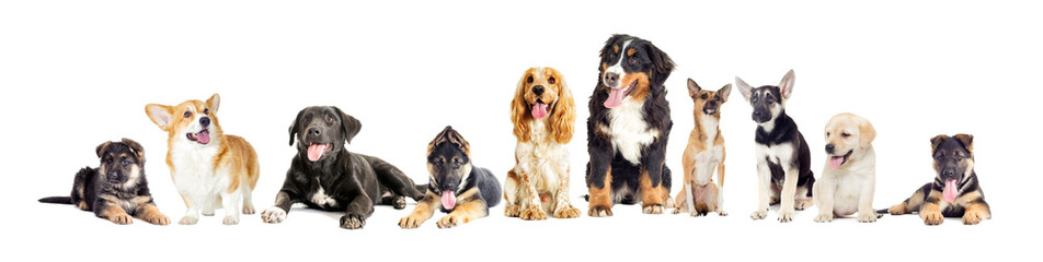 Dog group on a white background