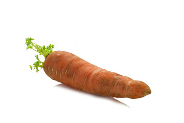 an old germinating carrots