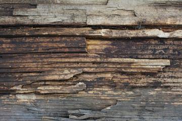 Longitudinal rough cut of a tree.