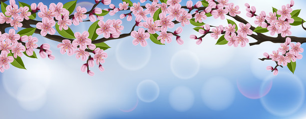 Horizontal spring banner with cherry tree branch, flower and leaf, with blue sky in background