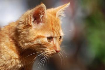 Portrait of a little yellow-orange newborn kitten looking sideways
