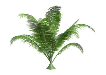 3D Rendering Giant Fern on White