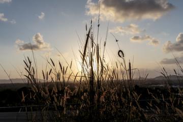 Natural grass sunset