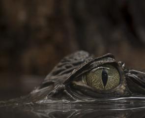 Occhio del caimano