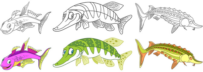 Cartoon underwater animals set. Collection of fishes. Furcata rainbowfish, pike fish, sturgeon fish. Coloring book pages for kids.