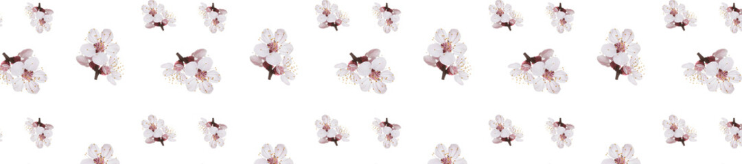 Wall Mural - panorama spring flowers  apricot on branches