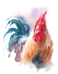 Watercolor Farm Bird Rooster Portrait Hand Painted Illustration isolated on white background