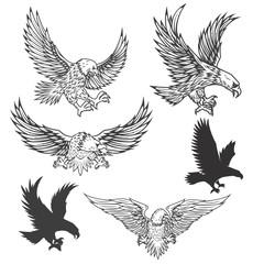 Illustration of flying eagle isolated on white background. Vector illustration.