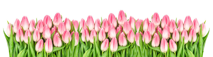In de dag Tulp Fresh spring tulip flowers banner Floral border Bouquet