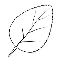 leaf silhouette vector symbol icon design.