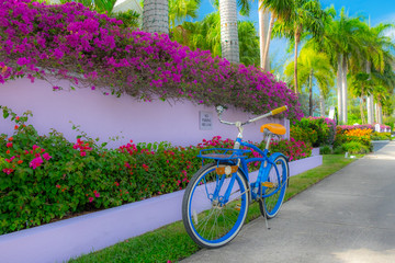 Blue Cruiser bicycle park on the pavement in front of a flower bed in the Caribbean,  Grand Cayman, Cayman Islands