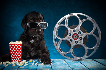 Black funny dog with 3D glasses and retro film production accessories.