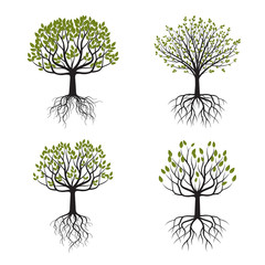Set Green Tree with Roots. Vector Illustration.