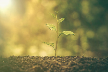 Agriculture. Plant seedling. A young baby plant growing on fertile soil with natural green background