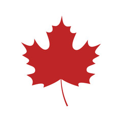 Single red maple leaf on white background. Vector maple leaf isolated.