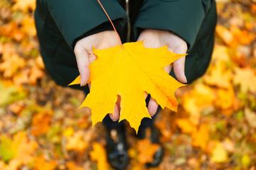 Female hands holding autumn leaf, closeup