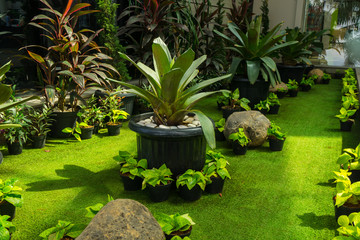 Plant in a stone pot in the middle of green landscape with grass and bushes photo taken in Jakarta Indonesia