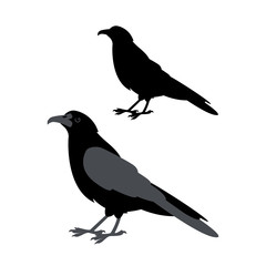 Raven vector illustration style Flat