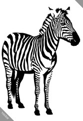 black and white linear paint draw zebra vector illustration