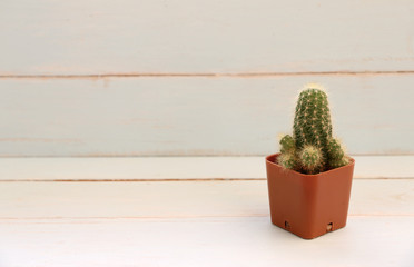 Cactus on old wooden table.Vintage Style.