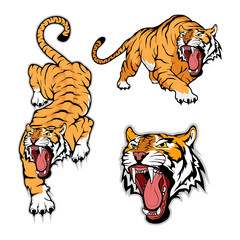 Tiger set, isolated on white background, colour illustration, suitable as logo or team mascot