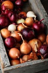 Rustic organic onions in different colors
