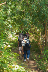 Traveller walking in the forest at Phu Soi Dao, Uttaradit in Northern Thailand.