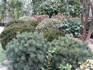 Garden centre with selection of nursery plants . Variety of evergreen shrubs