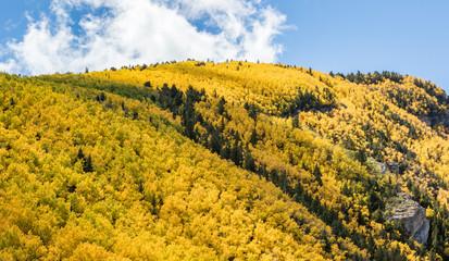Aspen trees in autumn on Sandia Mountains, Albuquerque, New Mexico