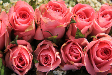 Pink roses and baby breath bouquet