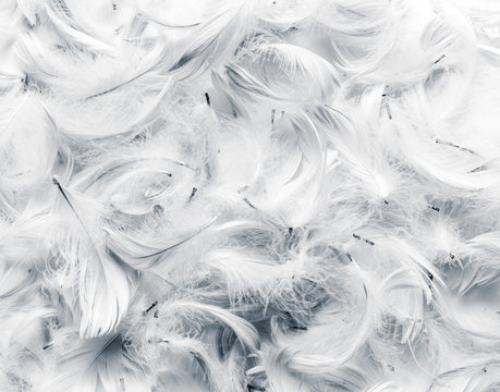 Black and white feathers background.