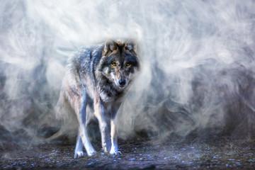 In de dag Wolf ein Wolf erscheint aus dichtem Nebel