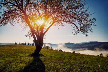 beautiful spring or summer landscape with mountain view and tree silhouette