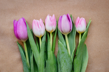 beautiful fresh pink and purple tulips on the paper