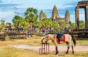 Horse at the Angkor Wat temples in Cambodia
