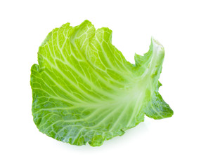 cabbage leaf on white background
