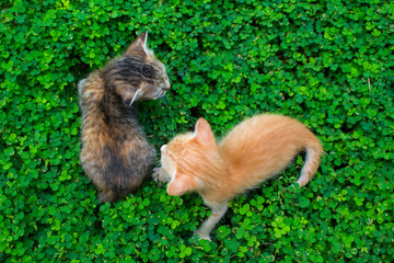 Two little kittens playing on the green grass. Red and black cat babies outside.