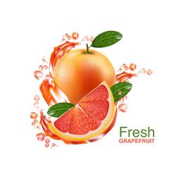 fresh grapefruit vector