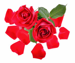 Beautiful red roses and petals on a white background